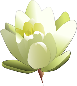 free vector Leland Mcinnes Water Lily clip art