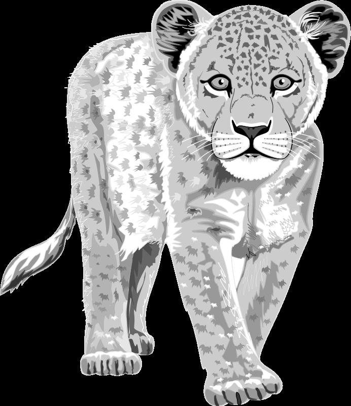 free vector Leopard 99077
