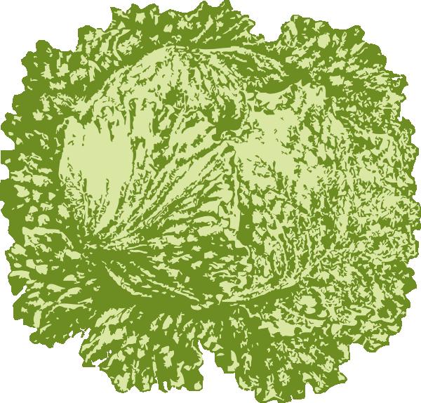 free vector Lettuce clip art