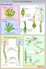 free vector Lifecycle Moss Svg Diagram Es clip art