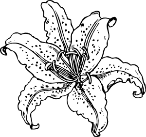 free vector Lilium Auratum clip art