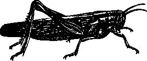free vector Locust clip art
