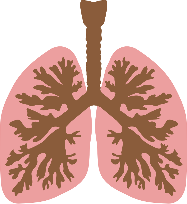 Lungs Silhouette Png lungs and bronchus free vector / 4vector