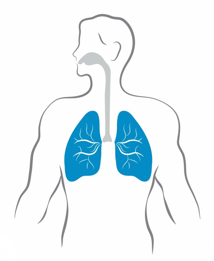 Lungs and human body Free Vector / 4Vector