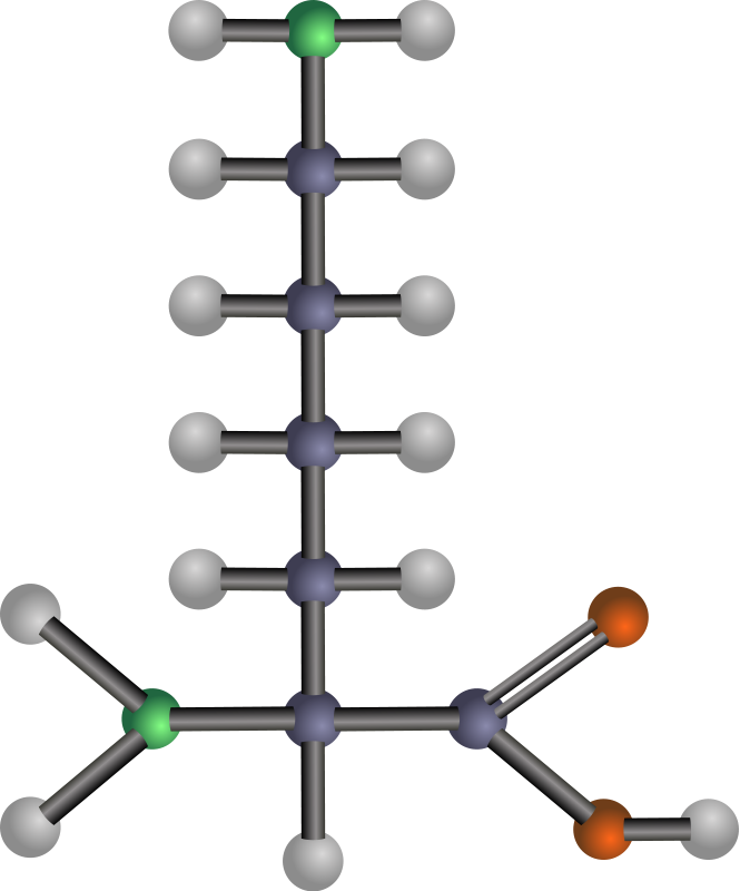 free vector Lysine (amino acid)