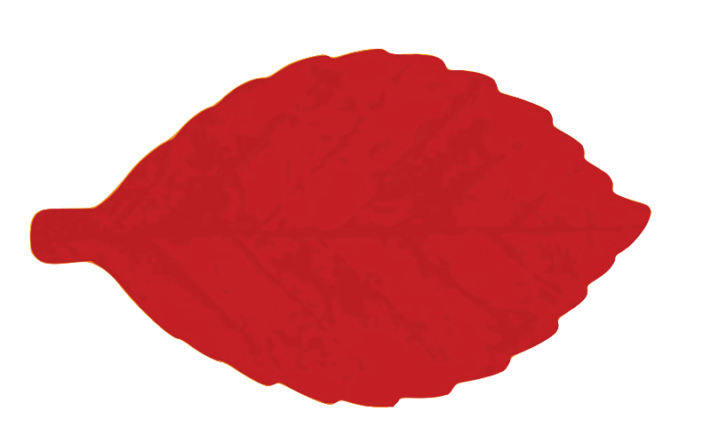 free vector M Leaf 04