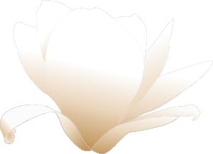 free vector Magnolia_white clip art