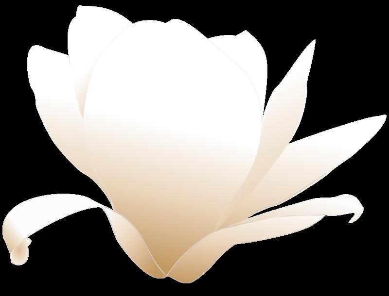 free vector Magnolia white patricia 03r