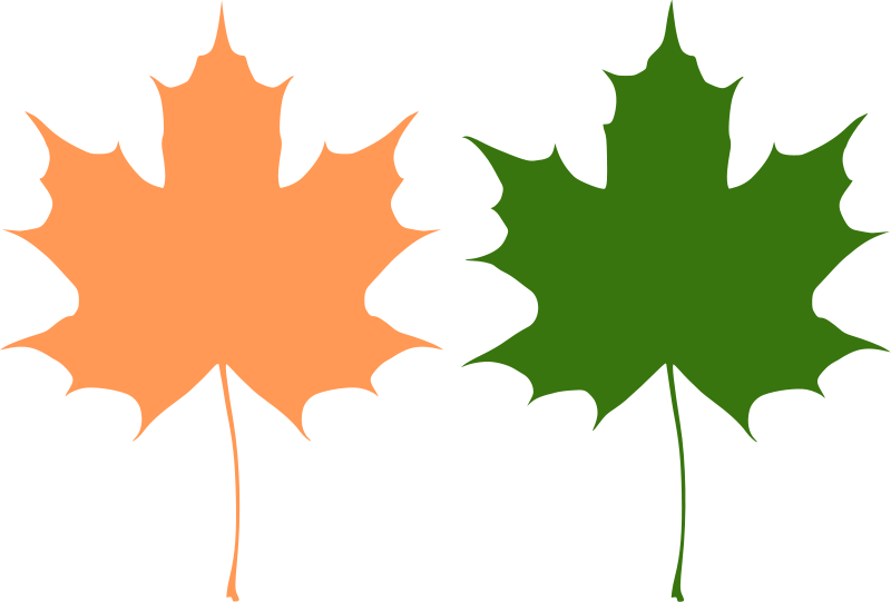 free vector Maple leaves