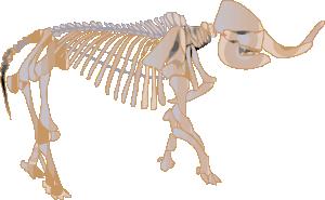 free vector Mastodon Fossil clip art