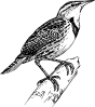 free vector Meadow Lark clip art