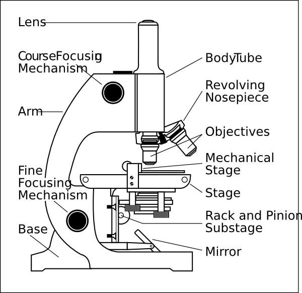 free vector Microscope With Labels clip art 111146
