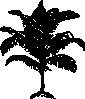free vector Miniature Coconut Palm clip art