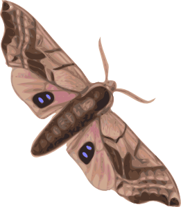 free vector Moth clip art