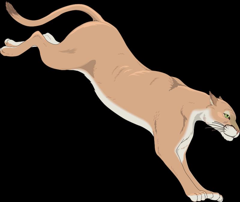 free vector Mountain Lion