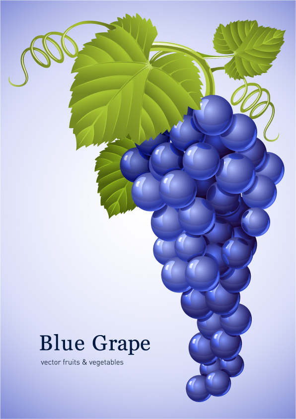 free vector Muscatel grapes vector