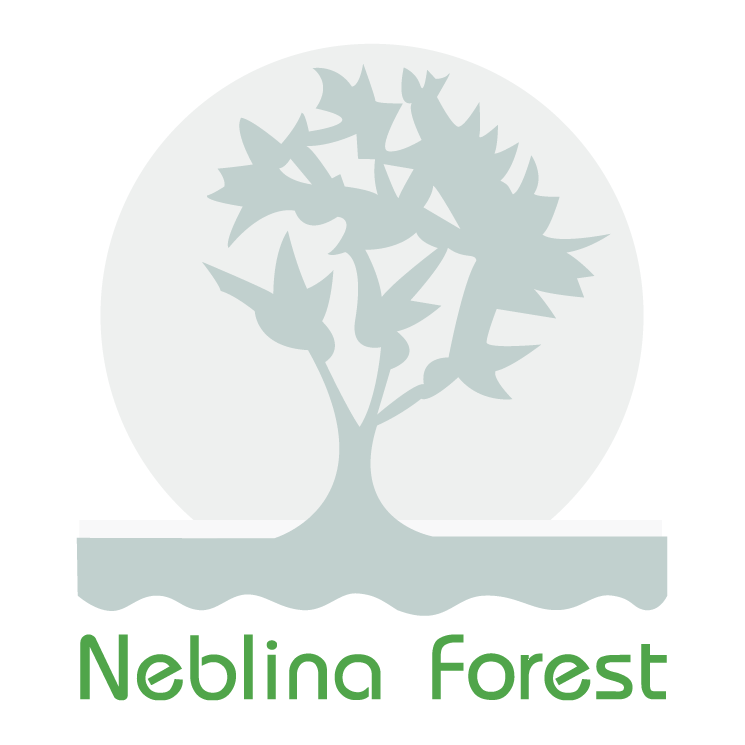 free vector Neblina forest