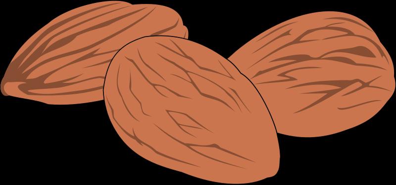 free vector Nut 02