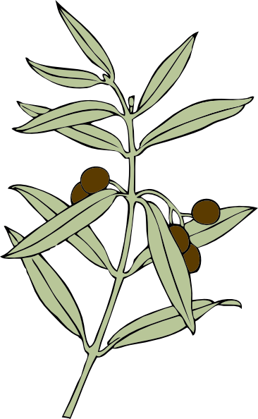 free vector Olive Branch clip art