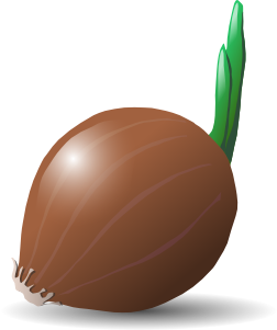 free vector Onion clip art