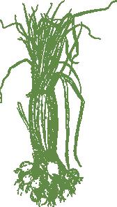 free vector Onions clip art