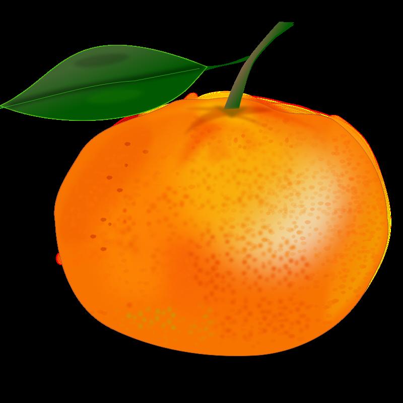 free vector Orange