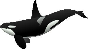 free vector Orca clip art