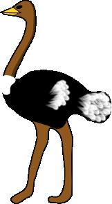 free vector Ostrich  clip art