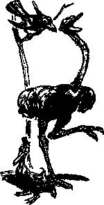 free vector Ostritch And Crow Cartoon clip art