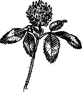 free vector Outline Clover clip art