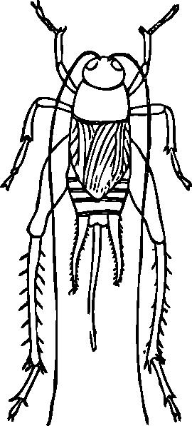free vector Outline Cricket clip art