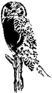 free vector Owl On Branch clip art