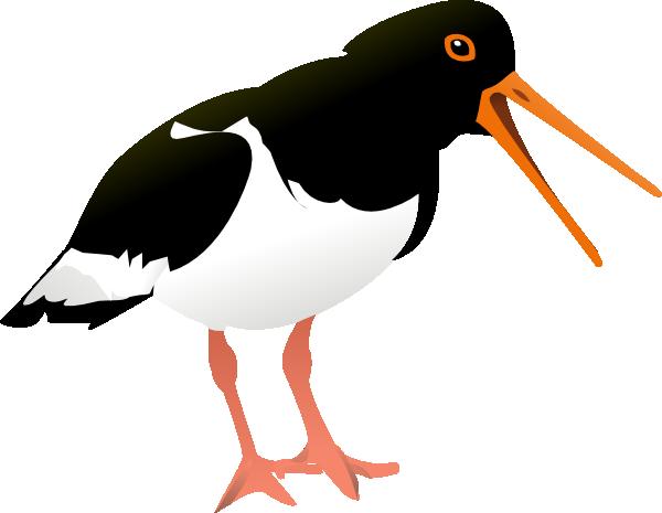 free vector Oyster Catcher Bird clip art