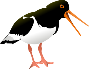 free vector Oyster Catcher Bird clip art