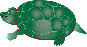 free vector Painted Turtle clip art