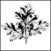 free vector Parsley clip art