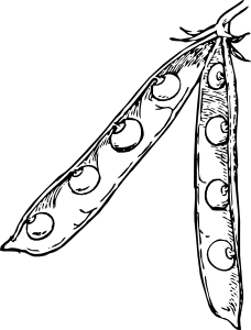 free vector Pea Pod clip art