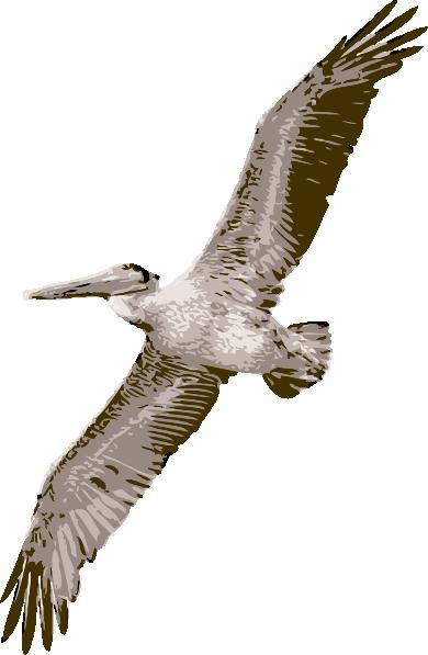 free vector Pelican clip art