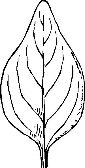 free vector Periwinkle Leaf clip art