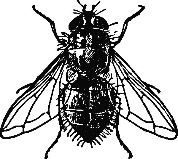 free vector Peterm Housefly clip art