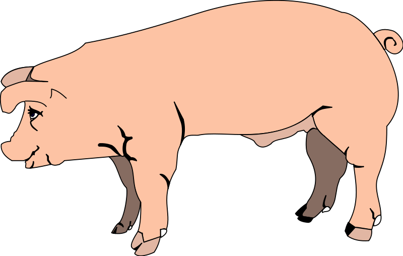 Pig 3 Free Vector / 4Vector