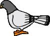free vector Pigeon clip art