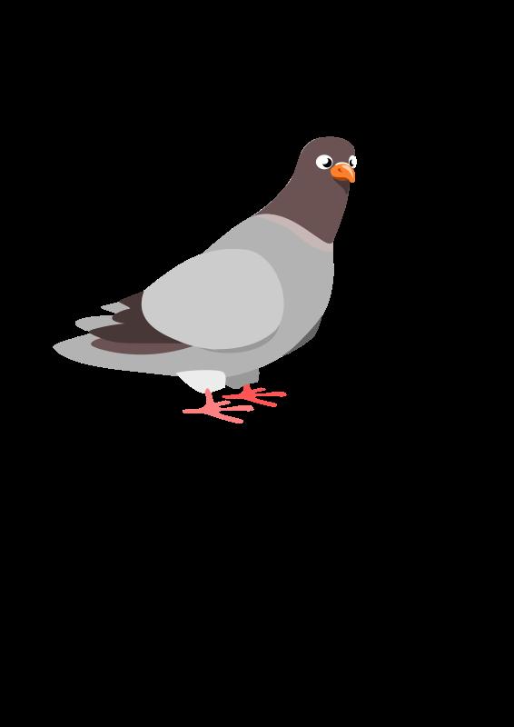 free vector Pigeon