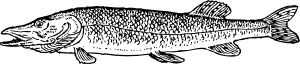 free vector Pike Fish Animal clip art