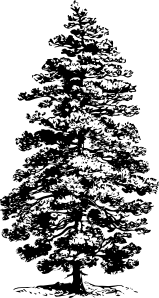 free vector Pine Tree clip art