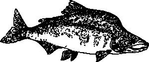 free vector Pink Salmon clip art