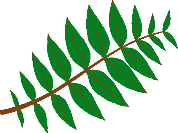 free vector Pinnate Leaf clip art