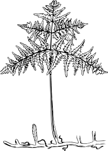 free vector Plant clip art