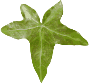 free vector Plant Leaf clip art