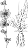 free vector Plant Outline clip art